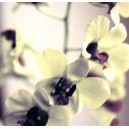 Orchid Impressionism 1